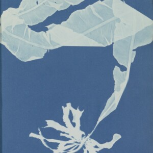 Anna Atkins Photographs of British Algae Cyanotype Impressions. Purchased with the support of BankGiro Lottery, the W. Cordia Family/Rijksmuseum Fund and the Paul Huf Fund/Rijksmuseum Fund.